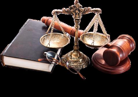 avocati-avocat (2)
